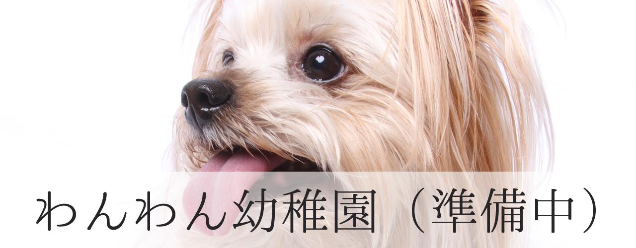 犬 幼稚園